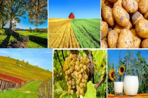 JURUSAN STUDI FAVORIT DI PTN JERMAN : FARMING / AGRICULTURE